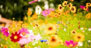 Da alegría a tu casa con flores