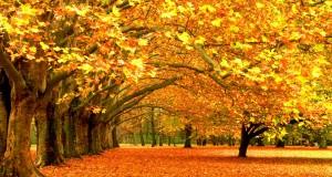 Se acerca el otoño…